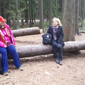 playingin-forest-teachers